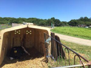 子牛と滝沢牧場